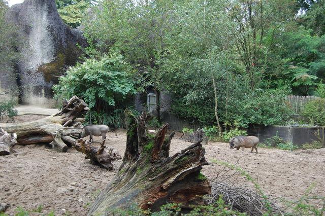 DSC 1614 Burgers Zoo