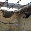DSC 1617 - Burgers Zoo
