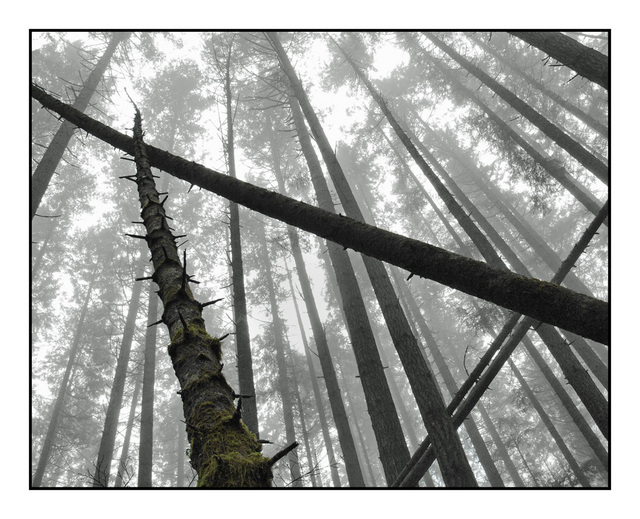 Foggy Morning Nature Images