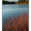 lake with red bushes - Landscapes
