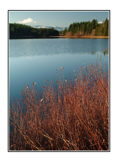 lake with red bushes Landscapes