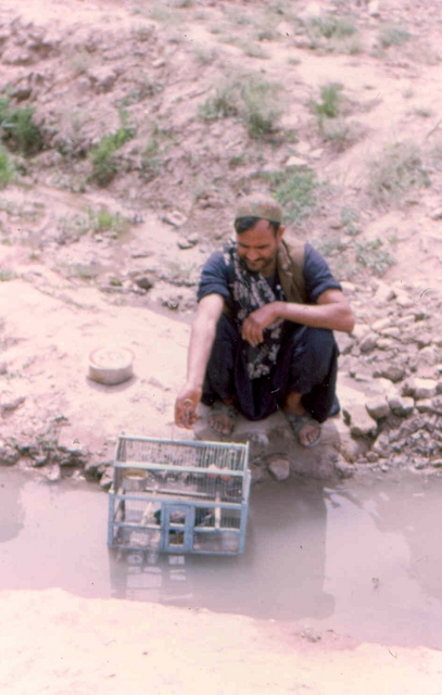 kabul parkvogel in kooi Afghanstan 1971, on the road