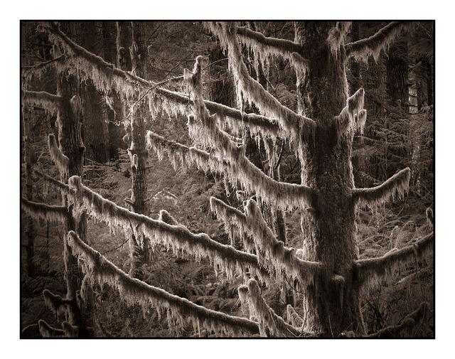 Sepia Trees Black & White and Sepia