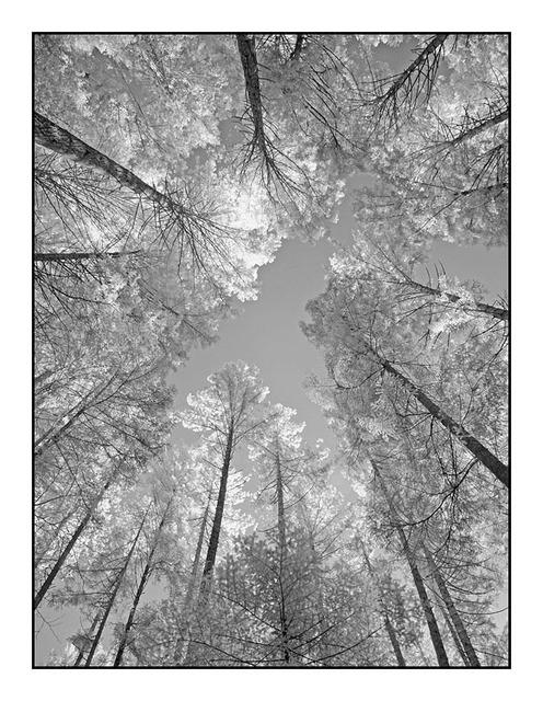 InfraForest Infrared photography