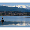 Comox Glacier - with heron ... - Landscapes
