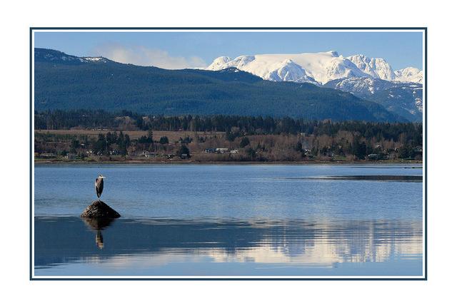 Comox Glacier - with heron wide Landscapes