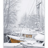 northern star in snow - Comox Valley