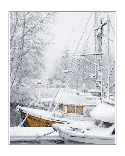 northern star in snow Comox Valley