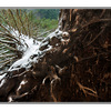 snowy fallen tree  - Nature Images