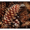 Cones - Close-Up Photography