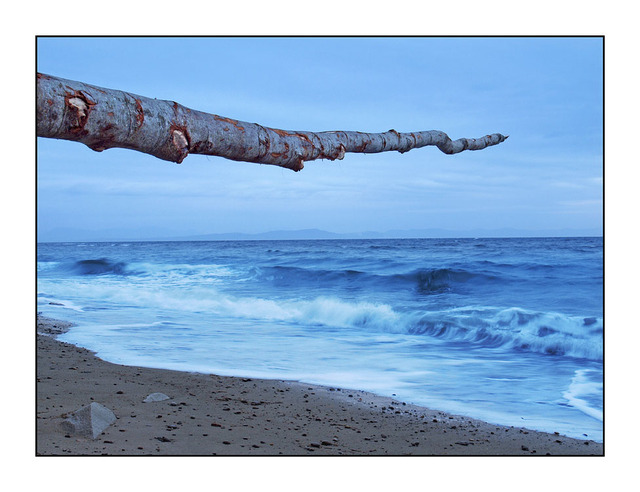 Driftwood in the Sky Landscapes