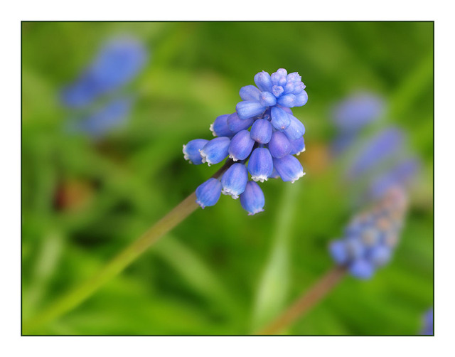 Blue Bells 2010 Close-Up Photography