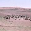 koerdistan schapen - Afghanstan 1971, on the road