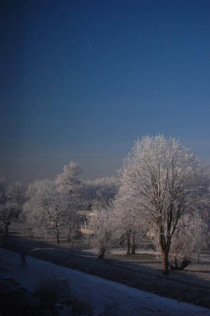 DSC 1867 Winter