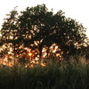 Zonsondergang - Nature calls