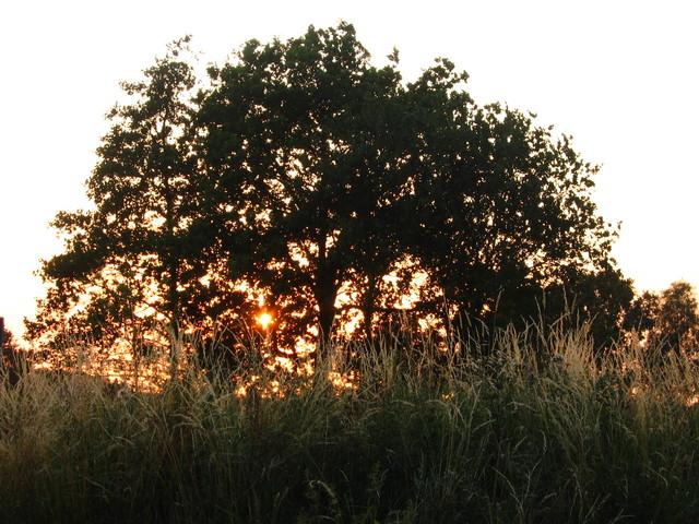 Zonsondergang Nature calls