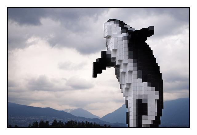 Digital Orca British Columbia Canada