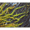 Tree Moss - Close-Up Photography
