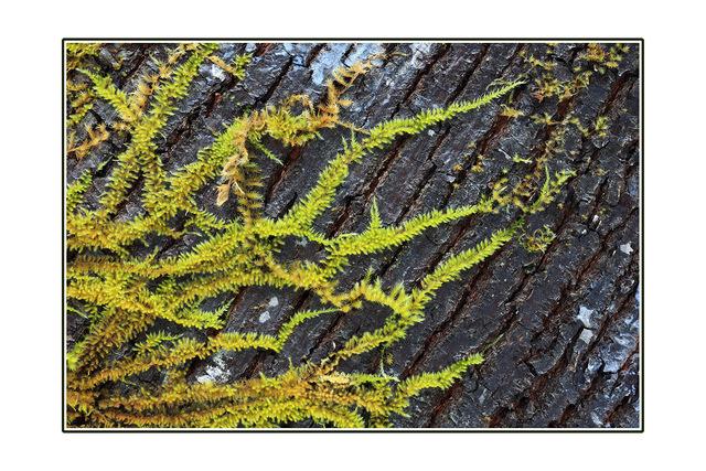 Tree Moss Close-Up Photography
