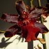 P1030461 - orchideëen