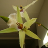 P1030463 - orchideëen