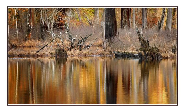 Puntledge Panorama Nature Images