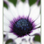 wild flower - Close-Up Photography