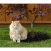 My cat and tree - Comox Valley