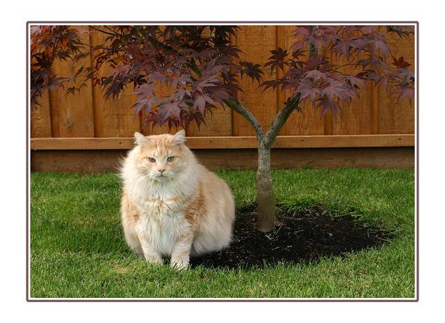 My cat and tree Comox Valley