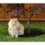 My cat and tree - Comox Valley