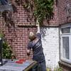 Klimop eraf met Niels Wessi... - Klimop verwijderen en meer ...