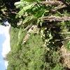 imgp0392 - Hawaii