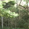 imgp0394 - Hawaii
