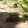 imgp0397 - Hawaii