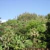 imgp0399 - Hawaii