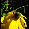 Bloem / wesp - Nature calls