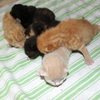 11-06-2010 014 - Augustus 2008