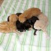 11-06-2010 015 - Augustus 2008