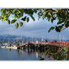deep bay with arbutus - Vancouver Island