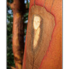 face in the tree - Close-Up Photography