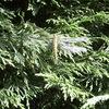 Tuin - Libelle 17-06-10 - In de tuin 2010