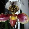 P1030543 - orchideëen