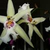 P1030600 - orchideëen