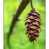 Hanging Cone - Close-Up Photography