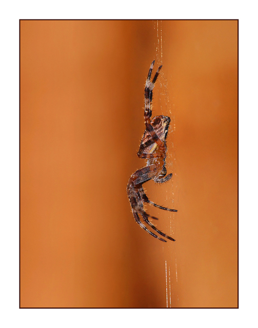 Spider hanging  Close-Up Photography
