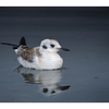 SeaBird Reflection - Wildlife
