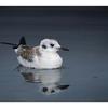 SeaBird Reflection - Wildlife