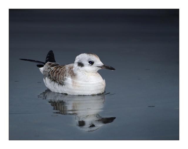 SeaBird Reflection Wildlife