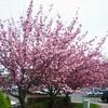 CIMG5144 - Wiosna 2010