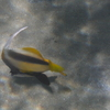 P1050185 - Rode Zee